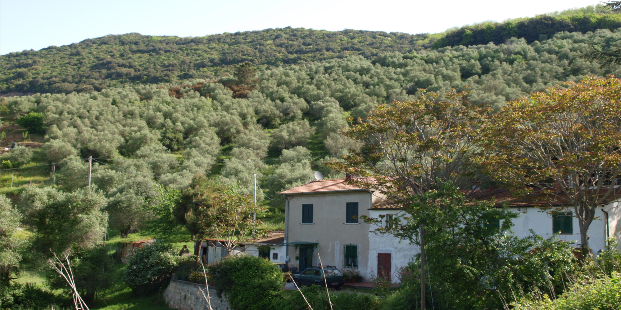 Versilia view. House with olive grove
